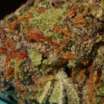 Urkle Berry